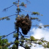 Another big ass nest