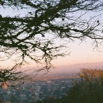 Portland framed by a tree