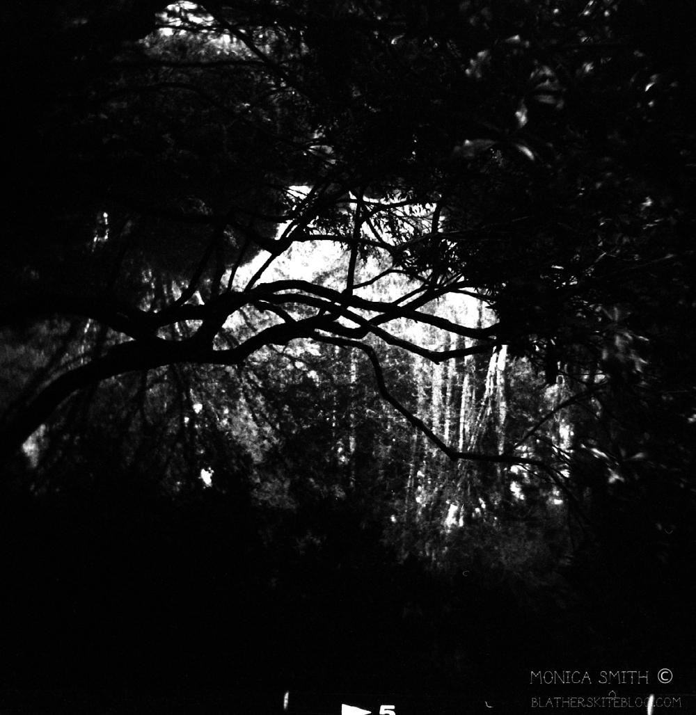 tree japanese gardens watermark