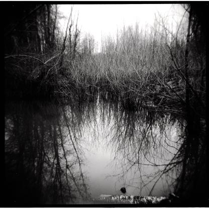 Holga + Kodak Tmax.