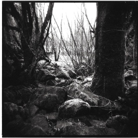 I took a hike with my new Holga. I have fallen in love with medium format photography.