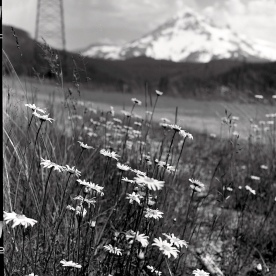 Mt Hood from LoLo Pass Road. Yashica Mat (of course).