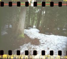 My shot: snowy trail