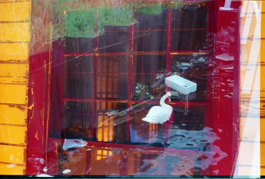 Red window, white swan