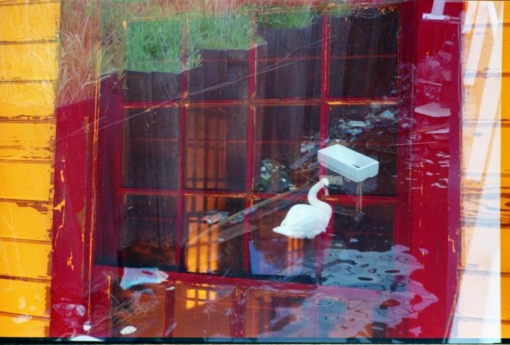Red window, white swan
