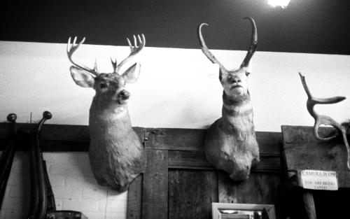 a couple of bucks