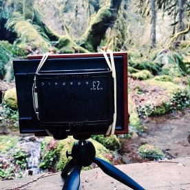 3/20: Pinhole in the forest