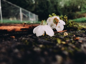 4/13: Love those blossoms