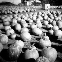 Holga Halloween